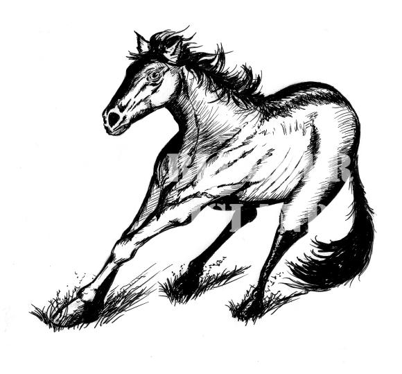 horse marked